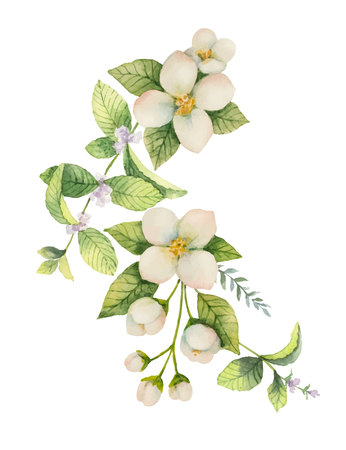 Watercolor vector wreath Jasmine and mint isolated on a white background. Stock Vector - 90368192