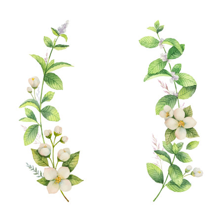 Watercolor vector frame of Jasmine and mint branches on white background.