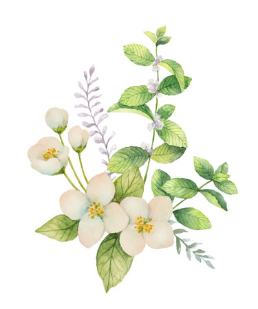 Watercolor vector bouquet of Jasmine and mint branches isolated on white background. Vectores