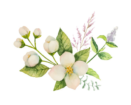Watercolor vector bouquet of Jasmine and mint branches isolated on white background. Çizim