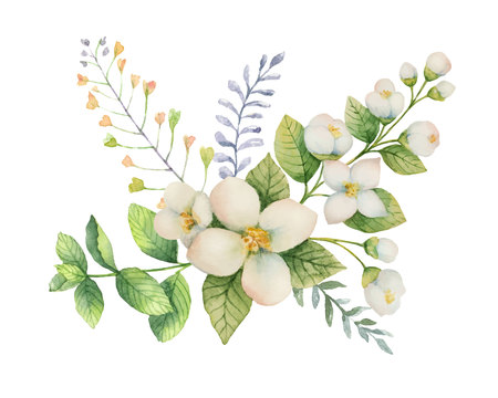Watercolor vector bouquet of Jasmine and mint branches isolated on white background. Illustration