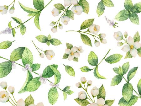 Aquarellvektorkarte von den Blumen Jasmin- und Minzenniederlassungen lokalisiert auf weißem Hintergrund.
