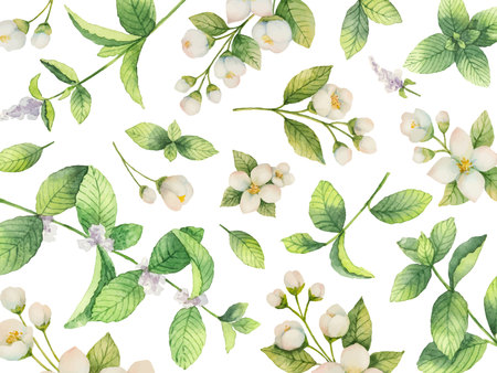 Watercolor vector card of flowers Jasmine and mint branches isolated on white background.