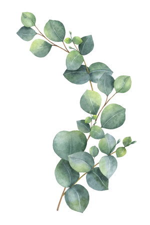 Watercolor vector wreath with green eucalyptus leaves and branches.  イラスト・ベクター素材