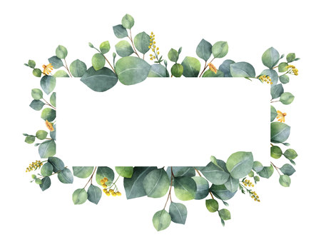 Watercolor vector wreath with green eucalyptus leaves and branches. Çizim