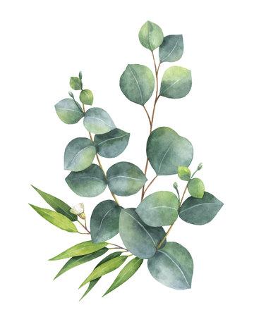 Aquarellvektorblumenstrauß mit grünen Eukalyptusblättern und -niederlassungen. Frühlings- oder Sommerblumen für Einladungs-, Hochzeits- oder Grußkarten. Vektorgrafik