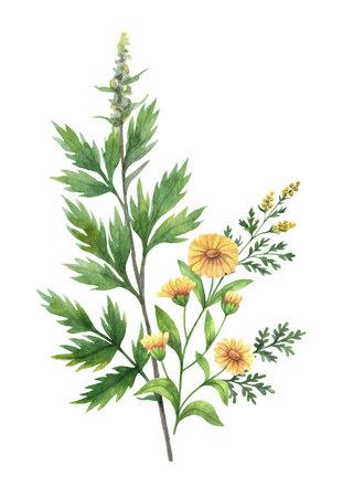 Watercolor vector bouquet with meadow plants.