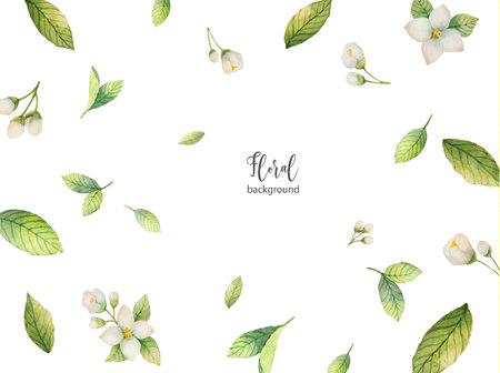 Aquarellvektorhintergrund von Blumen und von Niederlassungen Jasmin. Standard-Bild - 91735621