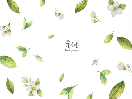 Watercolor vector background of flowers and branches Jasmine.