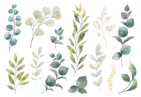 Hand drawn watercolor set of herbs, wildflowers and spices.