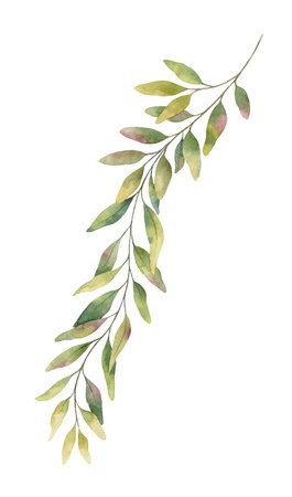 Watercolor hand painted green eucalyptus branch.