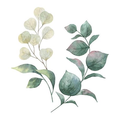 緑のユーカリの葉と枝を持つ水彩ベクターリース。