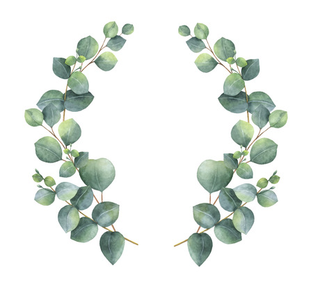 Watercolor vector wreath with silver dollar eucalyptus leaves and branches. Healing Herbs for cards, wedding invitation, awards, victories and success. Summer flowers with space for your text.