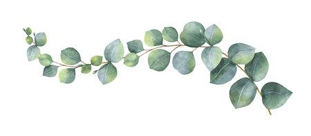 Akwarela wektor wieniec z zielonych liści eukaliptusa i gałęzi. Wiosenne lub letnie kwiaty na zaproszenie, wesele lub kartki z życzeniami.