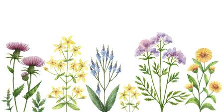 수채화 벡터 배너 의료 식물입니다.