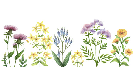 Watercolor vector banner with medical plants.