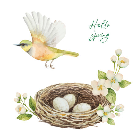 Watercolor vector wreath with bird, nest with eggs and flowers Jasmine isolated on a white background. Spring illustration for greeting cards, wedding invitations and packaging.  イラスト・ベクター素材
