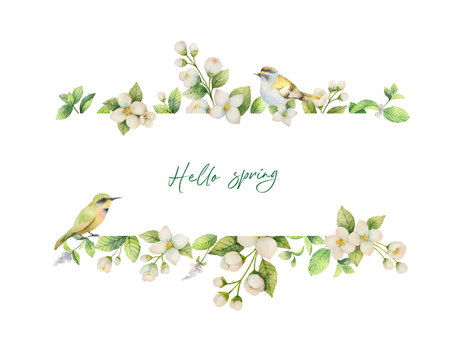Watercolor vector banner with bird and flowers Jasmine isolated on white background. Spring illustration for greeting cards, wedding invitations and packaging.