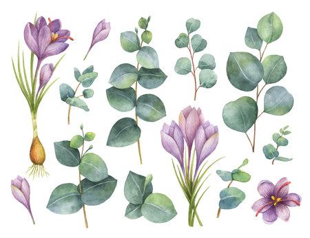 수채화 벡터 손을 유칼립투스 잎과 사프란의 보라색 꽃 세트를 그렸습니다.