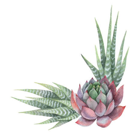 Watercolor vector bouquet of cacti and succulent plants isolated on white background. Banco de Imagens - 95297327