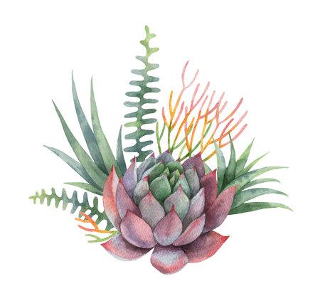 白い背景に分離されたサボテンと多肉植物の水彩ベクターブーケ。  イラスト・ベクター素材