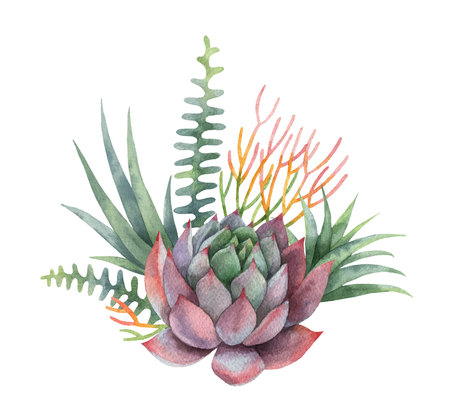 Watercolor vector bouquet of cacti and succulent plants isolated on white background. Фото со стока - 95296884