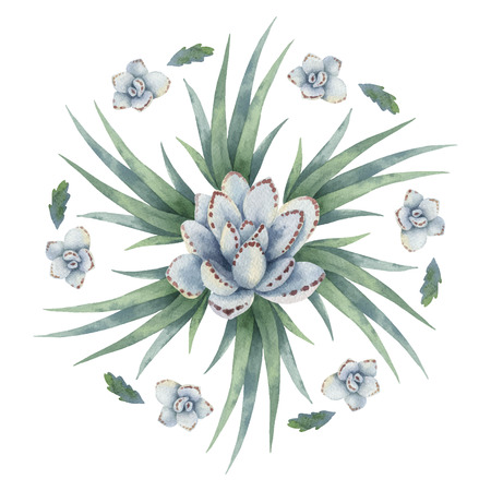 Isolated watercolor round mandala of cacti and succulent plants.