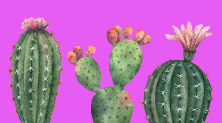 Watercolor vector set of cacti and succulent plants isolated on pink background. Vector Illustration