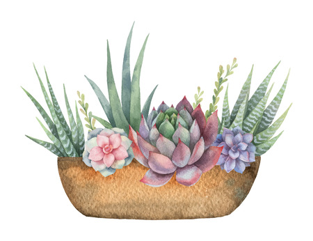 Watercolor vector composition of cacti and succulents in a pot isolated on white background. Imagens - 95892356