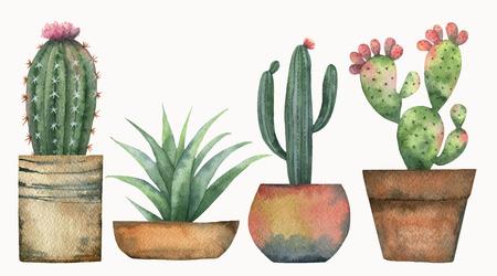 Waterverf vector set van cactussen en succulente planten geïsoleerd op een witte achtergrond.