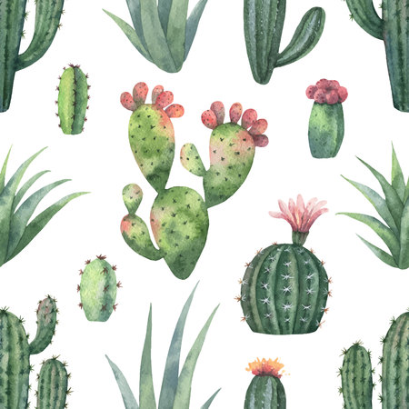 Watercolor vector seamless pattern of cacti and succulent plants isolated on white background.