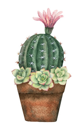 Watercolor vector composition of cacti and succulents in a pot isolated on white background. Banco de Imagens - 95915048