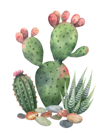 Watercolor vector collection of cacti and succulents plants isolated on white background.