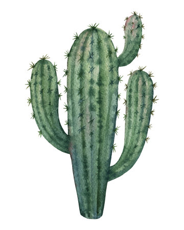 Watercolor vector cactus isolated on white background.