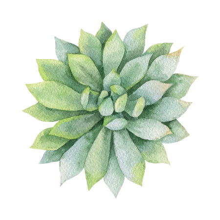 Watercolor vector green succulent isolated on white background.