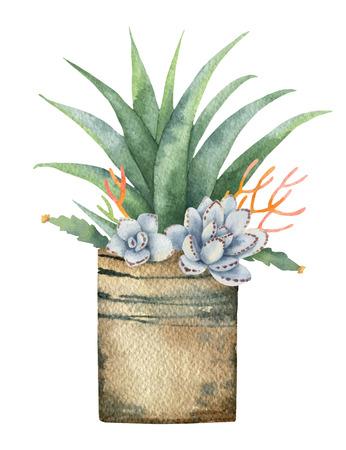 白い背景に分離されたポット内のサボテンと多肉植物の水彩ベクター組成物。