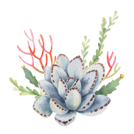 Watercolor vector bouquet of cacti and succulent plants isolated on white background. Flower illustration for your projects, greeting cards and invitations.