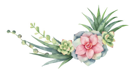 Watercolor vector wreath of cacti and succulent plants isolated on white background. 免版税图像 - 96326998