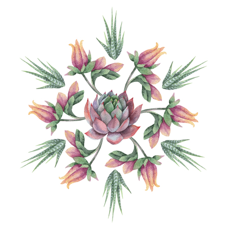 Watercolor round mandala of cacti and succulent plants isolated on white background. Фото со стока