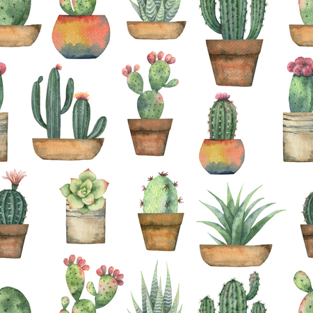 Watercolor seamless pattern of cacti and succulent plants isolated on white background. 스톡 콘텐츠