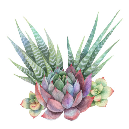Watercolor bouquet of cacti and succulent plants isolated on white background. Imagens - 97550354