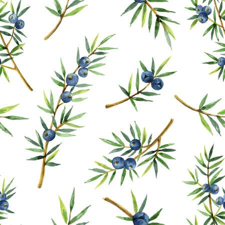 Aquarell nahtlose Muster von Pflanzen Wacholder isoliert auf weißem Hintergrund Standard-Bild - 98698611