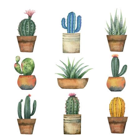 aquarelle vecteur ensemble de cactus et succulentes plantes isolé sur fond blanc