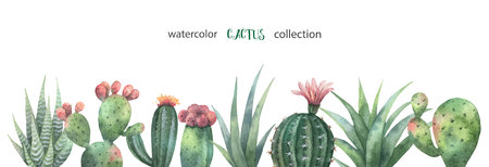 Watercolor vector banner of cacti and succulent plants isolated on white background.