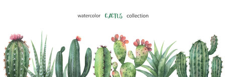 Watercolor vector banner of cacti and succulent plants isolated on white background. Imagens - 98590505