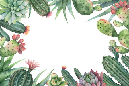 Watercolor vector card of cacti and succulent plants isolated on white background. Illustration