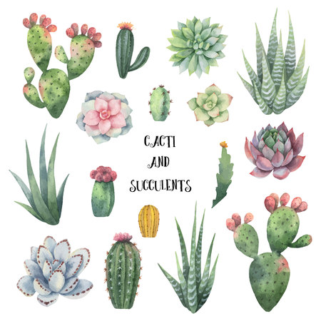 Watercolor vector set of cacti and succulent plants isolated on white background.