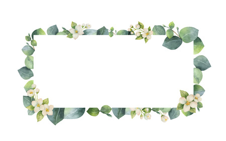 Marco de vector acuarela con hojas de eucalipto verde, flores de jazmín y ramas. Flores de primavera o verano para invitaciones, bodas o tarjetas de felicitación.