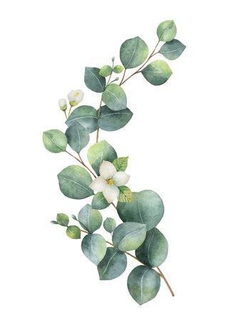 Aquarellvektorkranz mit grünen Eukalyptusblättern, Jasminblüten und Zweigen. Vektorgrafik