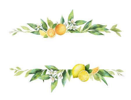 Bandiera di vettore dell'acquerello di agrumi e foglie. Vettoriali